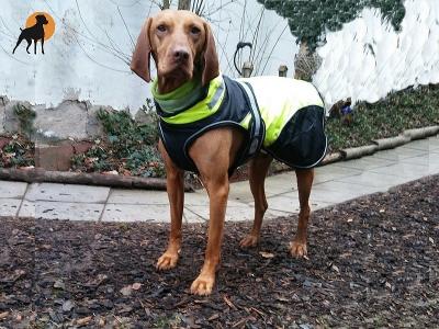 Trixie Mantel Safety Flash, schwarz-gelb, Rückenlänge: 50cm